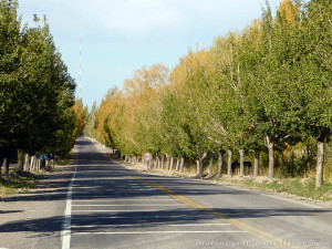 Tree-lined roads.